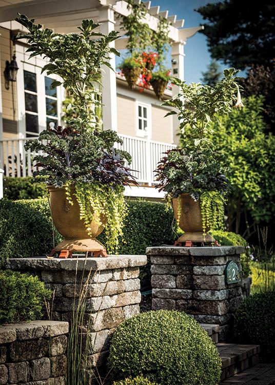 Welcome to the Neighborhood - Plants